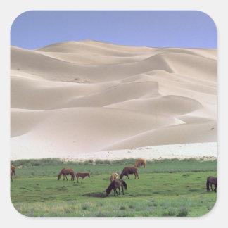 Asia, Mongolia, Gobi Desert. Wild horses. Square Sticker