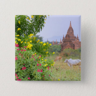 Asia, Myanmar (Burma), Bagan (Pagan). Cows 15 Cm Square Badge