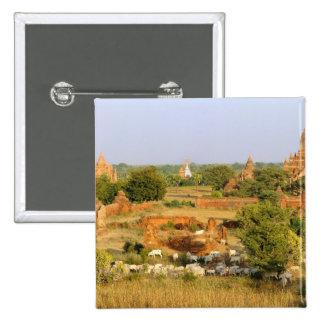 Asia, Myanmar (Burma), Bagan (Pagan). Cows pass 15 Cm Square Badge
