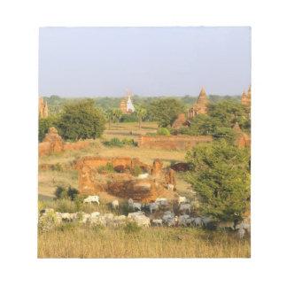 Asia, Myanmar (Burma), Bagan (Pagan). Cows pass Notepad