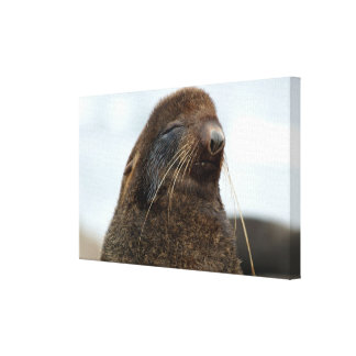 Asia, Russia, Russian Far East, Kamchatkan Gallery Wrapped Canvas
