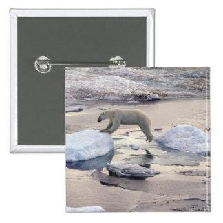 Asia, Russia, Siberian Arctic. Polar bear 15 Cm Square Badge