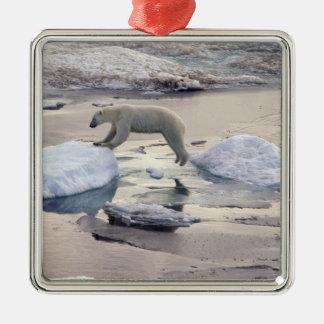 Asia, Russia, Siberian Arctic. Polar bear Christmas Ornament