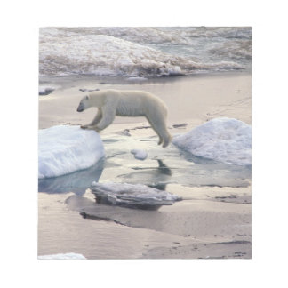 Asia, Russia, Siberian Arctic. Polar bear Notepad