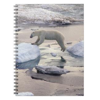 Asia, Russia, Siberian Arctic. Polar bear Spiral Notebook
