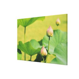 Asia, Thailand, Bangkok. Grand Palace, lotus Canvas Print