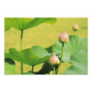 Asia, Thailand, Bangkok. Grand Palace, lotus Photo Print