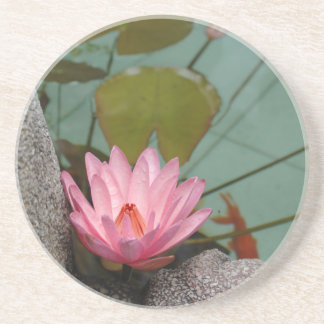 Asia, Vietnam. Water lily in a temple pond Beverage Coaster