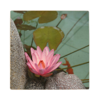 Asia, Vietnam. Water lily in a temple pond Wood Coaster