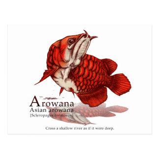 Asian arowana - flare ポストカード