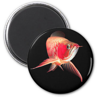 "Asian Arowana ""Super Red Type"" 6 Cm Round Magnet"
