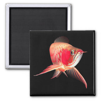 "Asian Arowana ""Super Red Type"" Square Magnet"