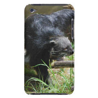 Asian Bearcat iTouch Case iPod Touch Case
