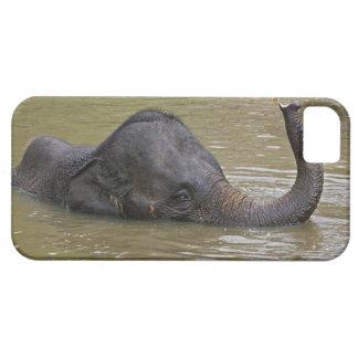 Asian Elephant bathing, Thai Elephant Barely There iPhone 5 Case