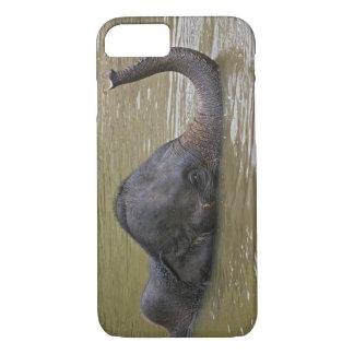 Asian Elephant bathing, Thai Elephant iPhone 8/7 Case