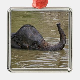Asian Elephant bathing, Thai Elephant Silver-Colored Square Decoration