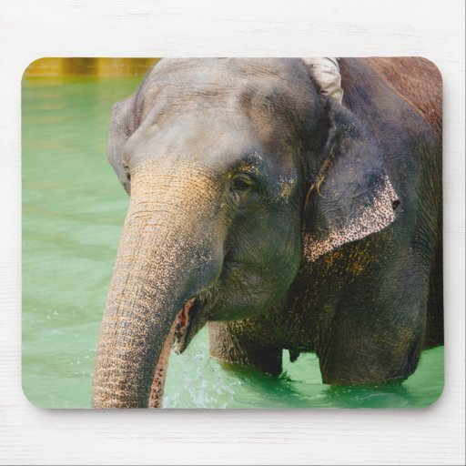 Asian Elephant In Green Water, Animal Photo Mousepad