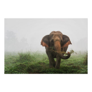 Asian Elephant in Thailand Poster