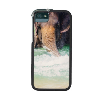 Asian Elephant Splashing In Water, Animal iPhone 5/5S Cover