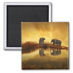 Asian Elephants in Thailand under a glowing sunset Square Magnet