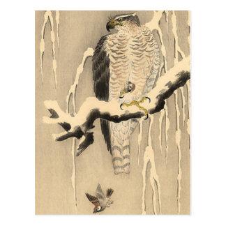 Asian Goshawk Painting Postcards