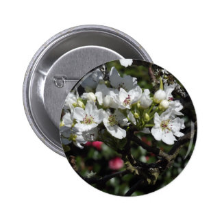 Asian Pear Blossoms 6 Cm Round Badge
