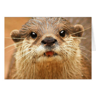 Asian Small Clawed Otter Greeting Card