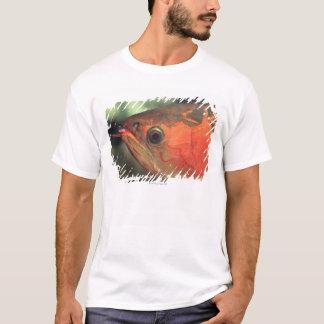 Asiatic arowana T-Shirt