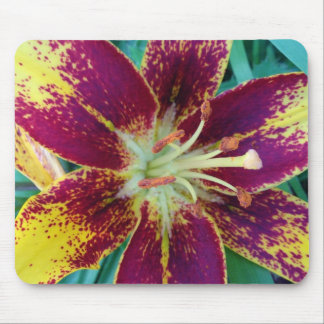 Asiatic Lilly Photo design Mouse Pad