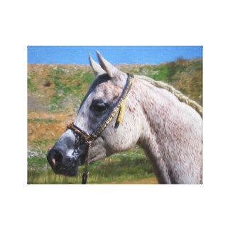 Asil Arabian Mare Oil Painting on Canvas Canvas Print