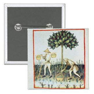 Asparagus Pickers, 13th century 15 Cm Square Badge