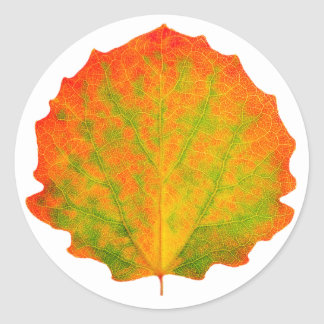 Aspen autumn leaf classic round sticker