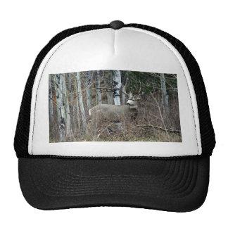 Aspen buck trucker hat