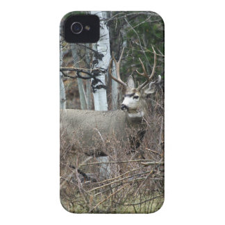 Aspen buck iPhone 4 covers