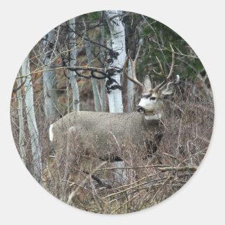 Aspen buck round sticker