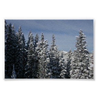 Aspen - Buttermilk Moutain tree tops Poster