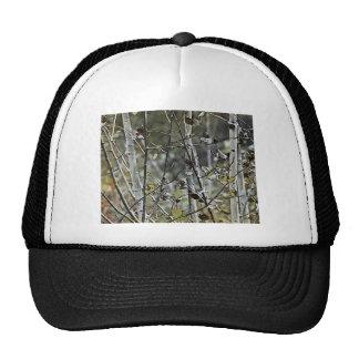Aspen Forest Cap