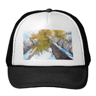 Aspen Grove Cap