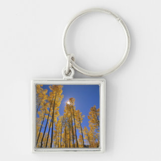 Aspen grove in autumn in the San Juan Range of Key Ring