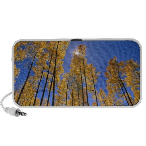 Aspen grove in autumn in the San Juan Range of Portable Speakers