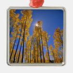 Aspen grove in autumn in the San Juan Range of Silver-Colored Square Decoration