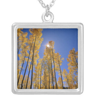 Aspen grove in autumn in the San Juan Range of Silver Plated Necklace