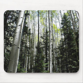 Aspen grove in forest mouse mat