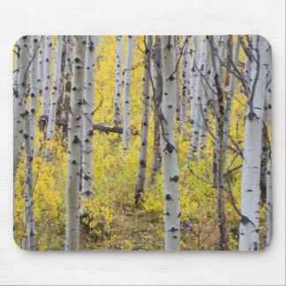 Aspen grove in peak fall color in Glacier Mouse Pad