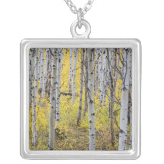 Aspen grove in peak fall color in Glacier Silver Plated Necklace