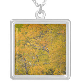 Aspen grove in peak fall colors near East Silver Plated Necklace