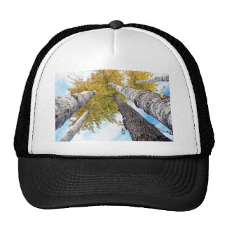 Aspen Grove Mesh Hats
