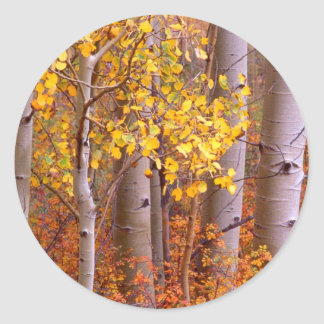 Aspen in Fall Classic Round Sticker