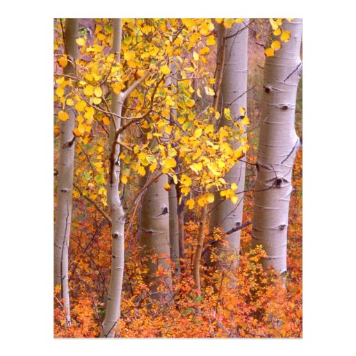Aspen in Fall Flyer