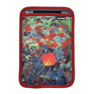 Aspen leaf on a lichen covered rock iPad mini sleeve